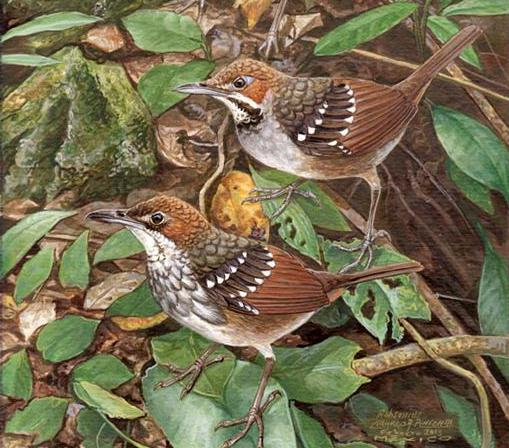 New PHL Bird Species Found In Northern Luzon