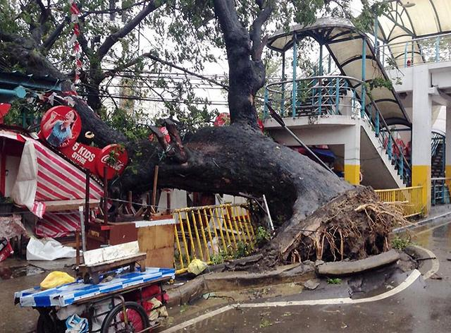 640_2013_11_08_13_00_28 - Typhoon Yolanda lashing: Images - Philippine Business News