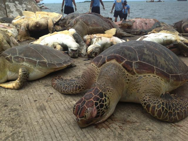 Dead sea turtles confiscated from Chinese fishing vessel