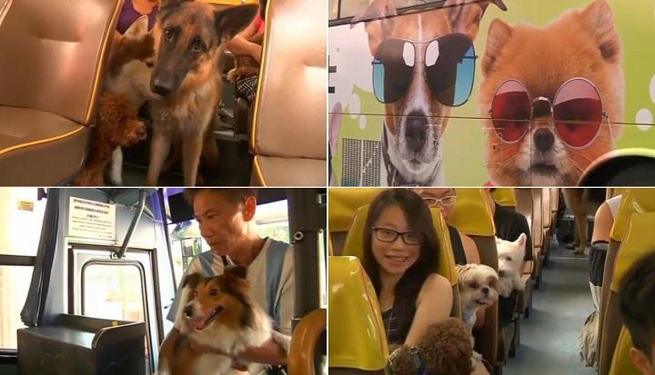 Λεωφορείο για σκύλους...