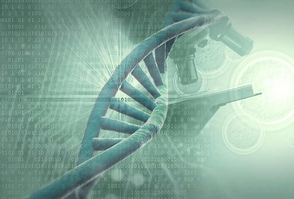 Scientists unveil the most precise 3D human genome model yet