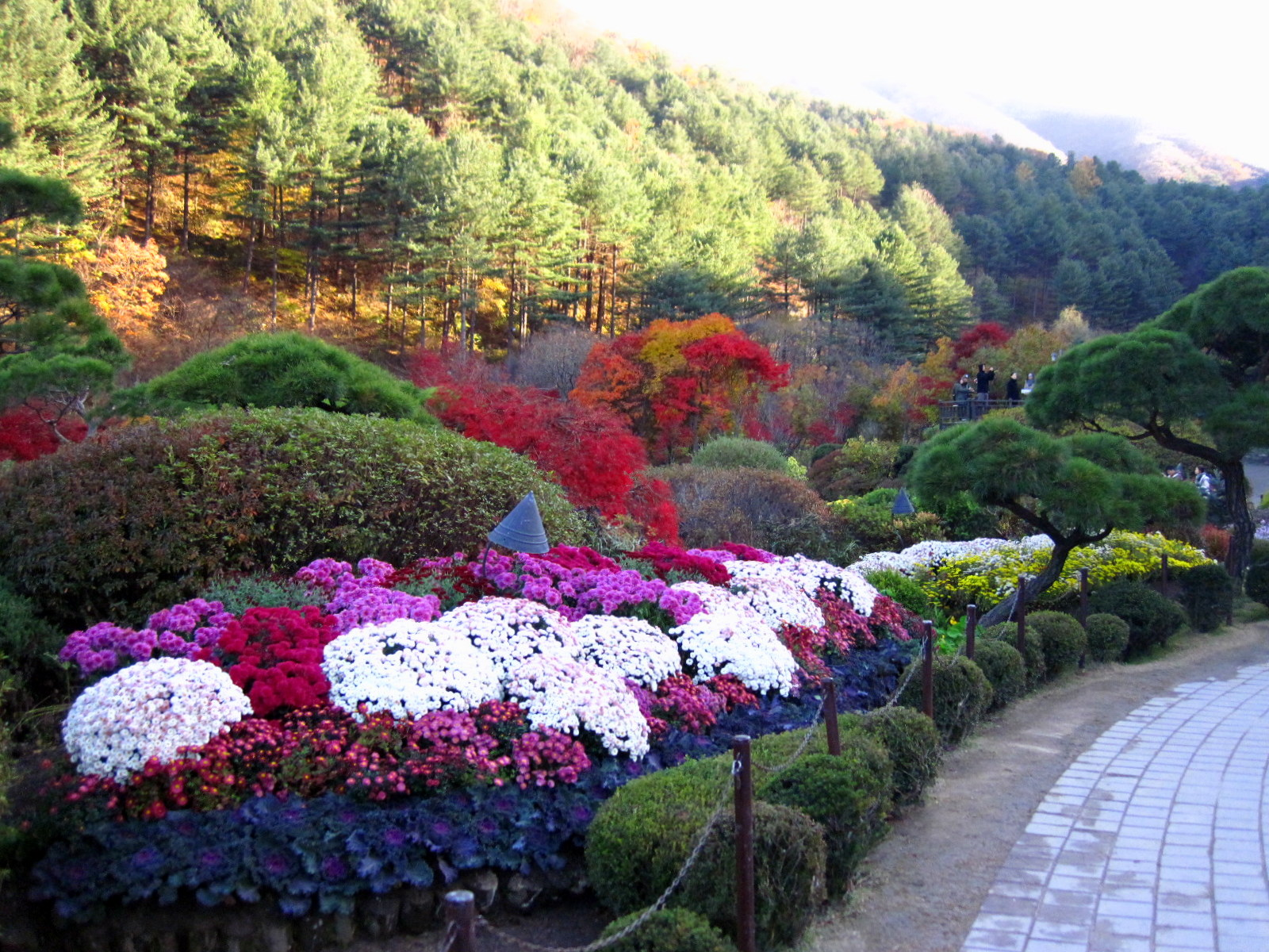 The Colors Of Korea Burst At Gapyeongs Garden Morning Calm A Sprawling Paradise On Land 33 Hectares Where Variety Festivals And