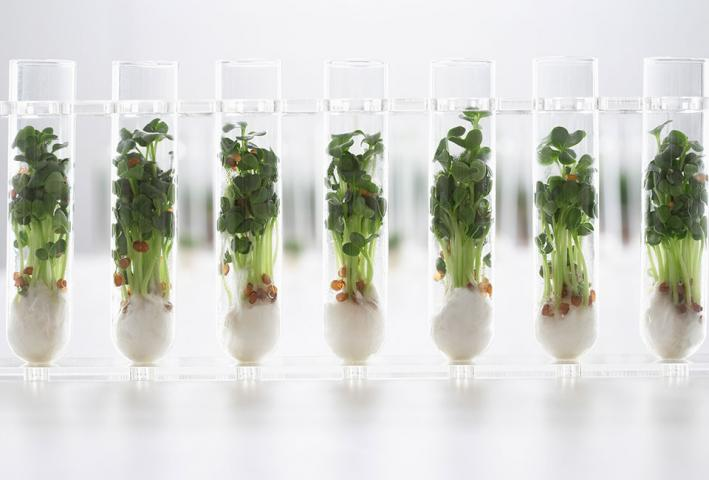 Research paper on genetic modified plants