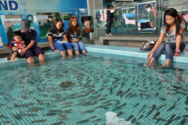Manila ocean park visitors enjoy the fish foot spa for Fish foot spa