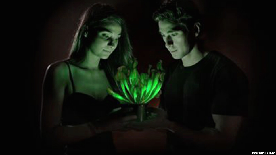 Glow-in-the-dark houseplants for sale as nightlights