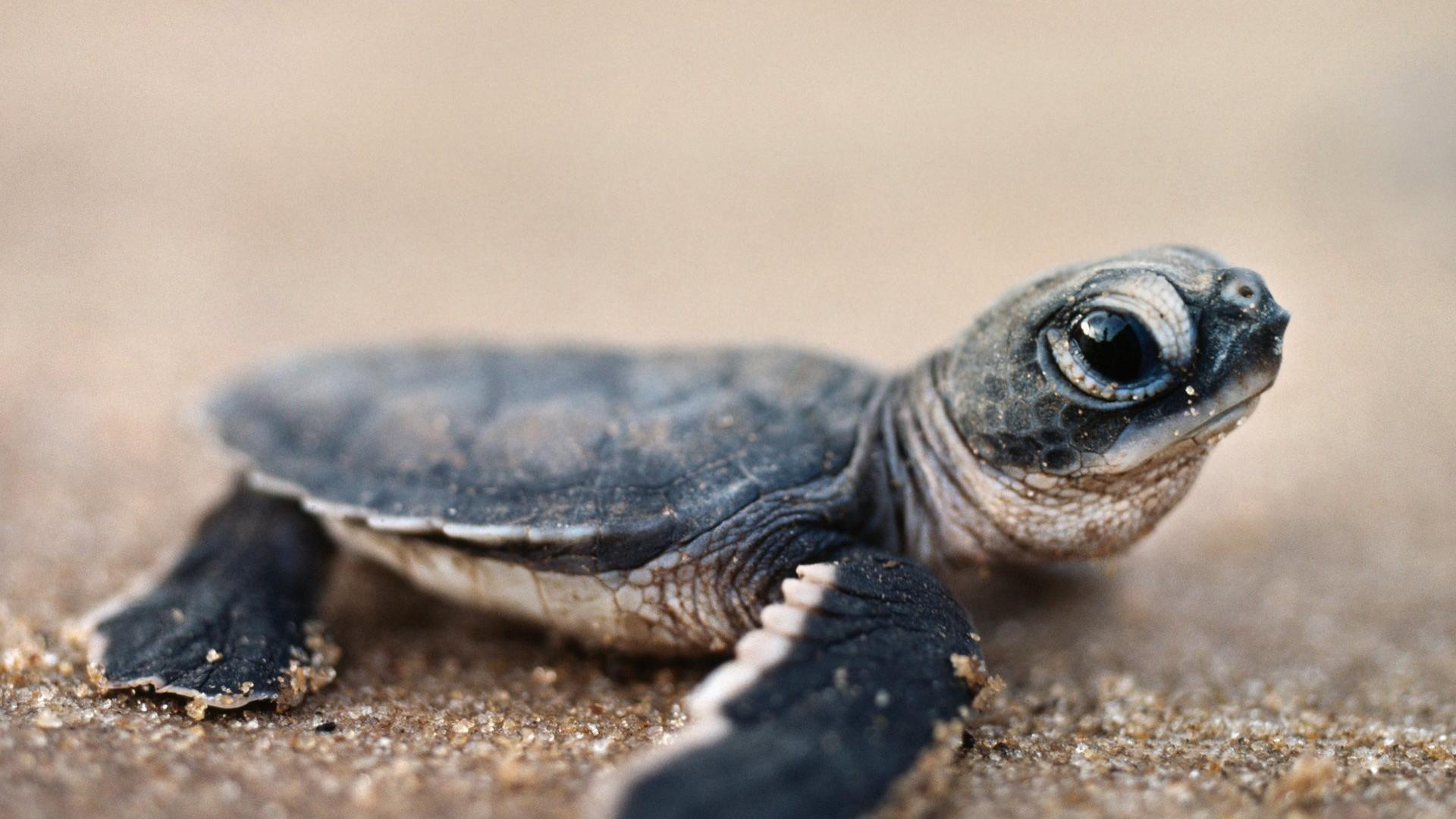 Scores Of Baby Sea Turtles Released In Davao City Scitech Gma News Online