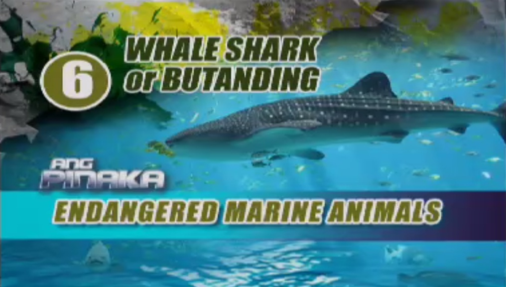top ten endangered marine animals image collections