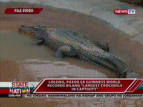 sona 062212 11 jpgLolong Crocodile Taxidermy