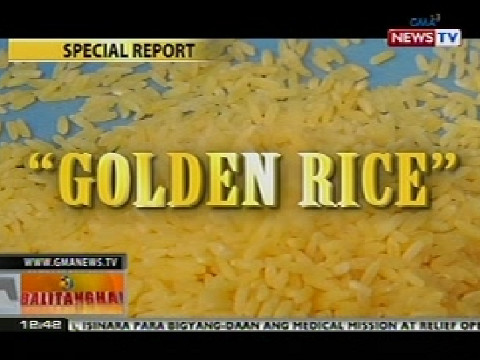 science report golden rice Genetically modified golden rice (gr) is a form of rice grain known as oryza sativa, which has been genetically engineered to contain a pursued quantity of vitamin a uncooked gr has an attractive yellow to orange colour, which fades after cooking due to the loss of translucency of the starch in the grain.