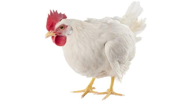 Bird Flu Found In Tennessee Chicken Flock On Tyson Contracted Farm