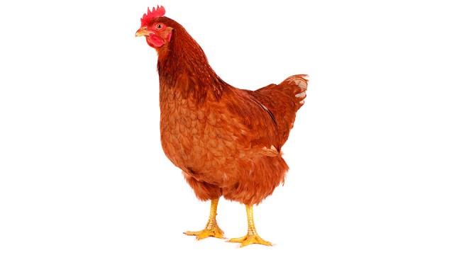 Asian avian flu seems me