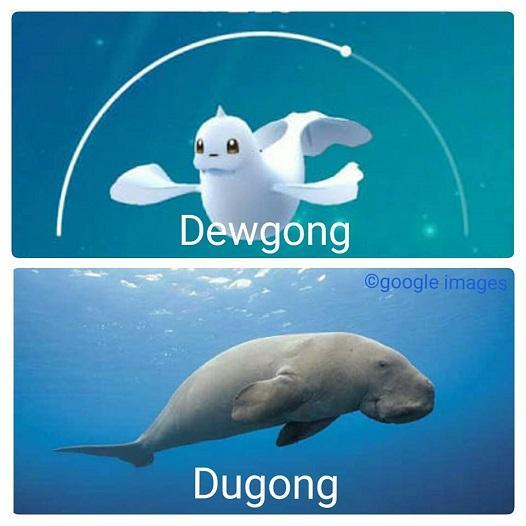 Dugong Pokemon Images Pokemon Images