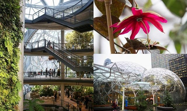 amazon office space. SEATTLE \u2014 Amazon.com Inc On Monday Opened A Rainforest-like Office Space In Seattle That It Hopes Will Spark New Ideas For Employees. Amazon N