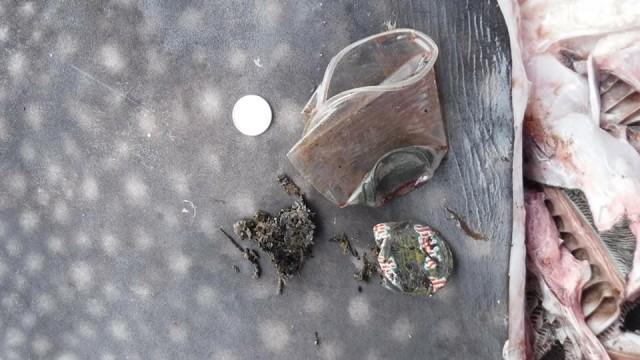 Plastic garbage recovered from the stomach of a whale shark, which was found dead on August 7, 2018. PHOTO BY DARREL BLATCHLEY