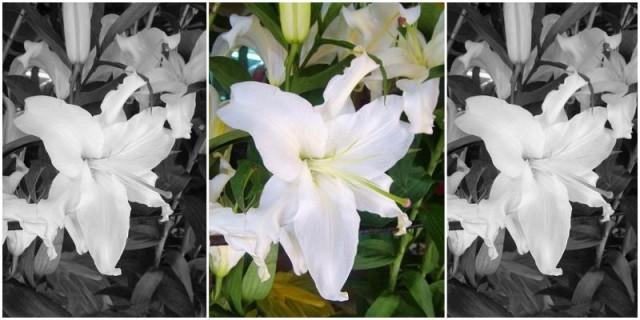 STARGAZERS, which means purity of heart, became the symbol that Ninoy and Cory were finally reunited in heaven
