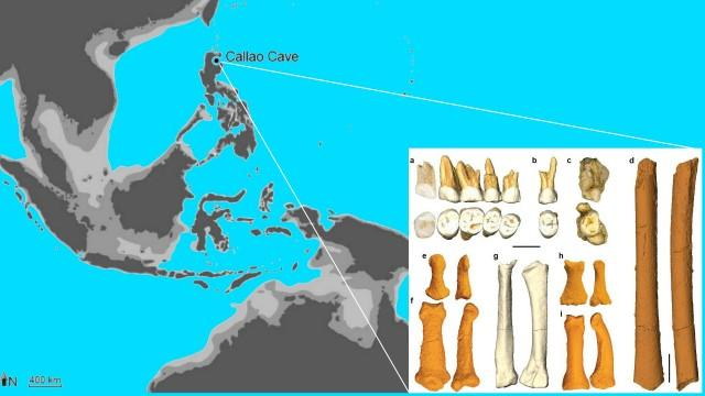A new species, Homo luzonensis, has been discovered based on bones and teeth found in Callao Cave in northern Luzon that date back over 50,000 years. PHOTO FROM NATURE MAGAZINE
