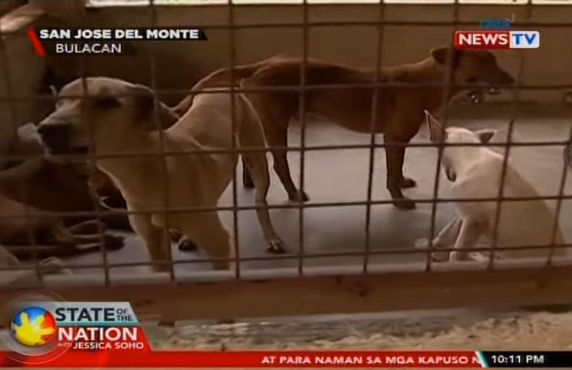100 dogs in Bulacan pound to be euthanized unless adopted soon