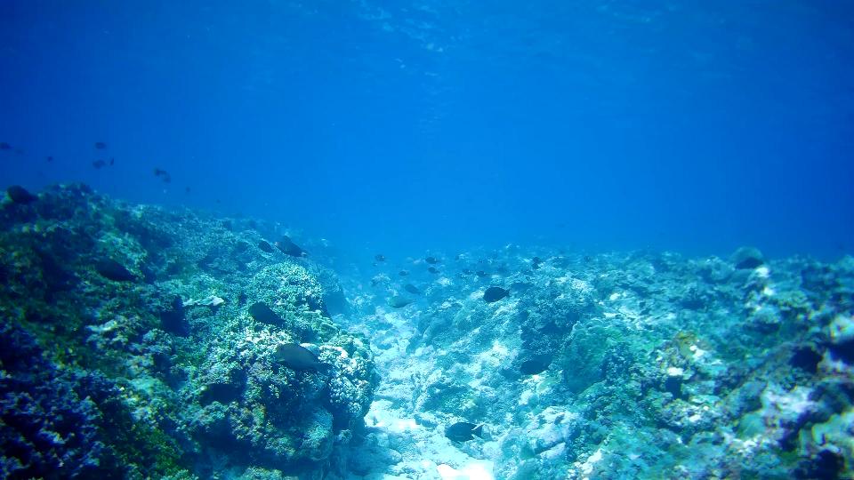 Poor condition of Kalayaan Island Group reefs associated