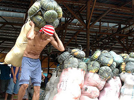A laborer carries a heavy sack full of squash at a vegetable warehouse which will be delivered to Davao City markets. Edgar Arro