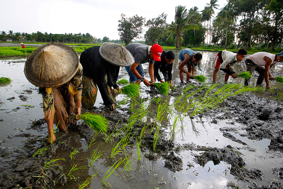 Bicameral panel approves Rice Tariffication bill | Money | GMA ...