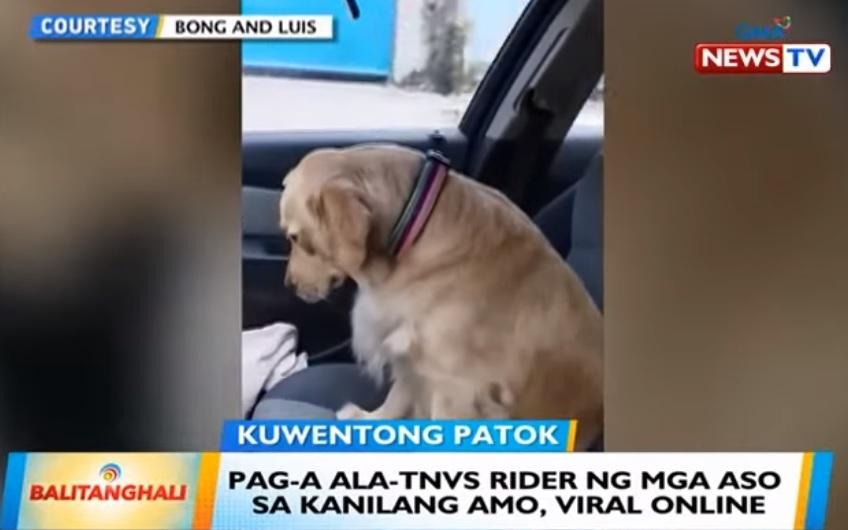 dogs in tnvs