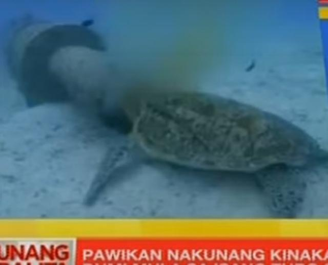 Sea turtle feeding on filth from Boracay pipe