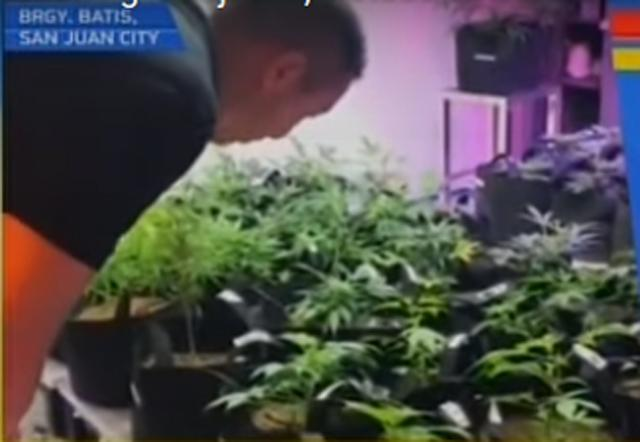 San Juan City: Indoor marijuana plantation