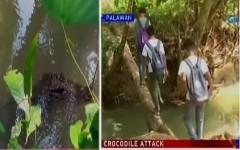 croc palawan