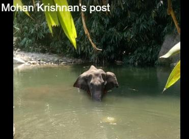 Wounded pregnant elephant drowns self in India river