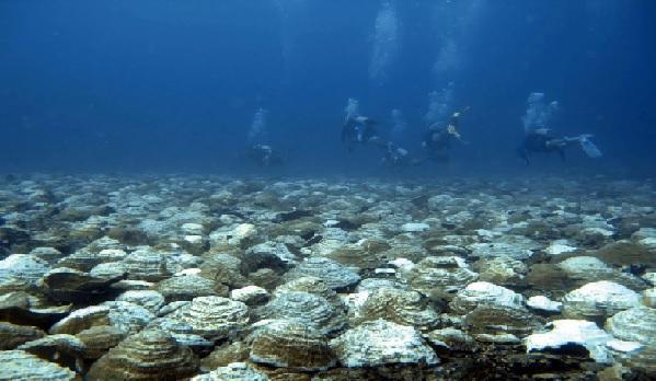 bowl corals